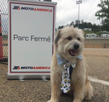 Crash: The Semi-Official Dog of Motoamerica