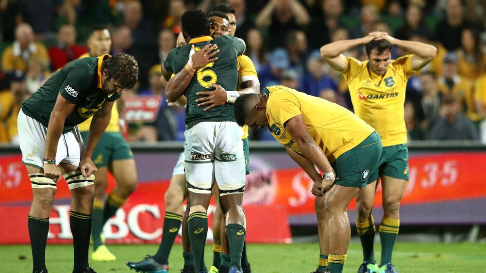 Rugby Championship: Australia and South Africa draw as All Blacks retain title