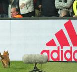 Besiktas not feline fine after cat incurs costs